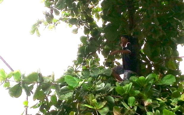 torcida Gávea treino seleção árvore (Foto: Daniel Falcão)