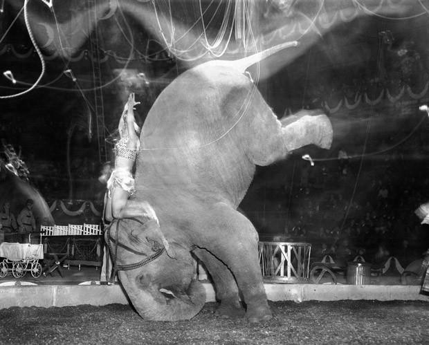 Foto de arquivo de abril de 1949 mostra apresentação de elfante no circo  Ringling Bros. and Barnum & Bailey no Madison Square Garden, em Nova York (Foto:  AP Photo/Matty Zimmerman)