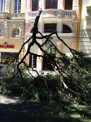 Árvore cai na Rua Marquês de Olinda, Recife Antigo (Foto: Carlos Alberto Vilas Boas / Acervo Pessoal)