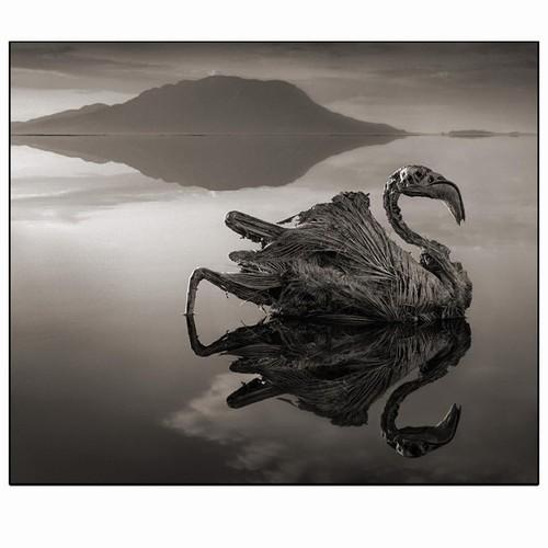 Foto (Foto: Um flamingo calcificado nas águas do Lago Natron)
