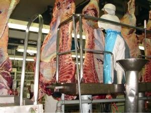 Abate de bovinos em MS (Foto: Divulgação/ Sato Comunicação)
