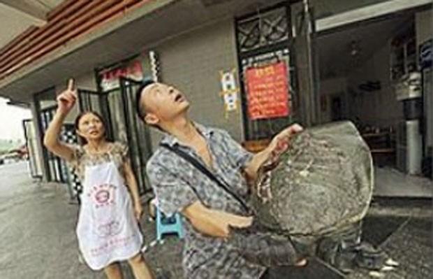Em julho deste ano, um chinês foi atingido por uma tartaruga que caiu da janela de um prédio de 45 andares em Chongqing, na China. Yao Chen estava conversando com clientes do lado de fora do seu restaurante, quando o animal caiu de uma altura de cerca de 40 metros e atingiu seu pé, quebrando o dedão. (Foto: Reprodução)