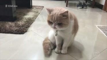 O que os gatos fazem quando os donos não estão perto? Confira!