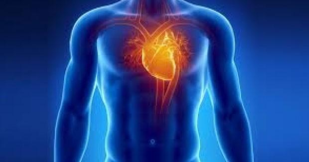 CardioHemo (Foto: Shutterstock)
