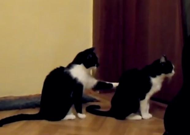 Gato tentou 'pedir desculpas' a amigo e, ao ser ignorado, se irritou e partiu para cima (Foto: Reprodução/YouTube/LonelyAtma)