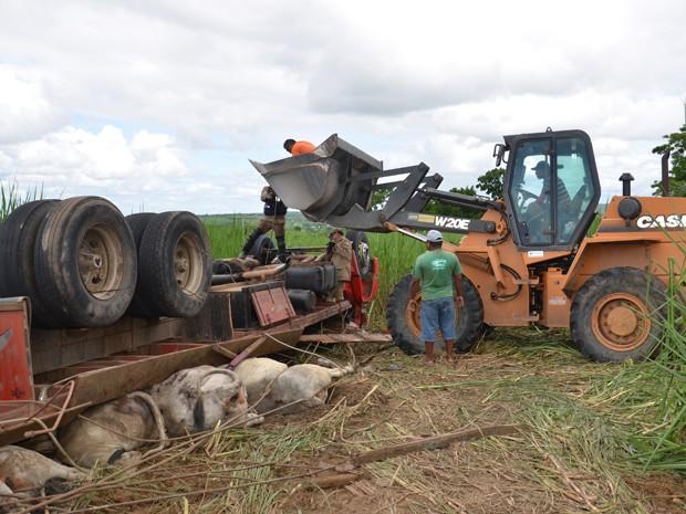 O motorista de um caminhão e vários bois que estavam sendo carregados morreram na tarde desta sexta-feira (14) após o veículo capotar na PB-008, em João Pessoa. (Foto: Walter Paparazzo/G1)