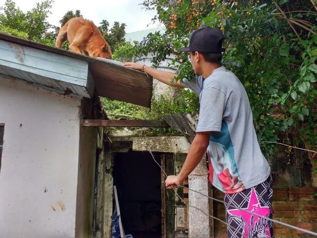 Cães ficaram abandonados por vários dias em casa de Florianópolis (Foto: Marcelo Siqueira/RBS TV)