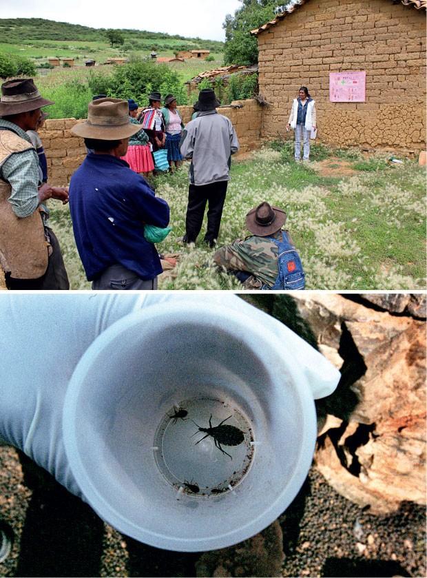 """BARBEIRO Na foto acima, uma agente dos Médicos Sem Fronteiras  explica a doença de Chagas a moradores da região boliviana de Narciso Campero. Na abaix, o barbeiro – ou """"Vinchuca"""", seu nome em língua quéchua. Na vida dos camponeses, o inseto é  como um vam (Foto: Vânia Alves )"""