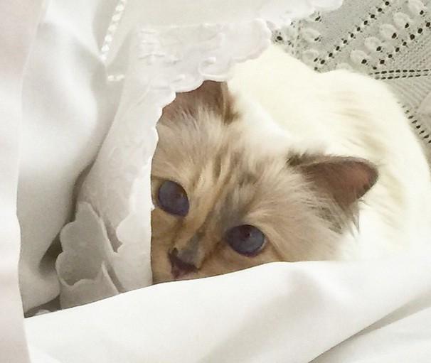 Choupette Lagerfeld, a gata mais rica do mundo (Foto: Reprodução/ Instagram)
