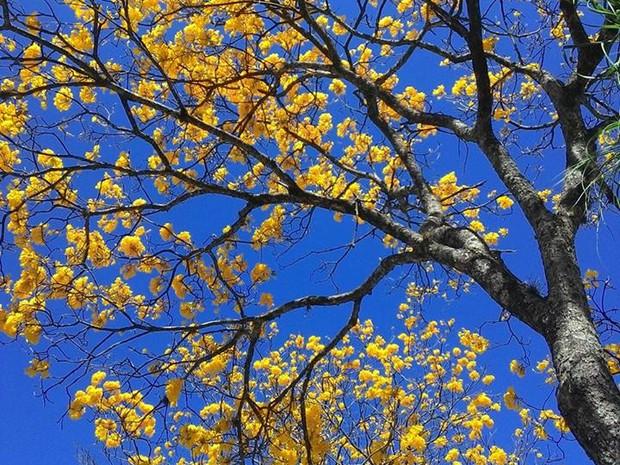 Primavera começou nesta quinta-feira em Uberlândia (Foto: Lais Vieira/G1)