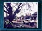 Árvore centenária corre risco de cair em Quissamã, que registra vento forte