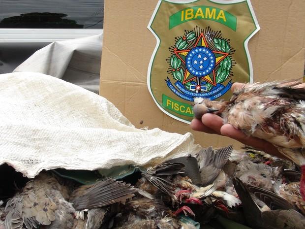 Ibama prendeu três homens e apreendeu 96 arribaçãs mortas em Pedências, no RN (Foto: Airton De Grande/Ascom/Ibama RN)