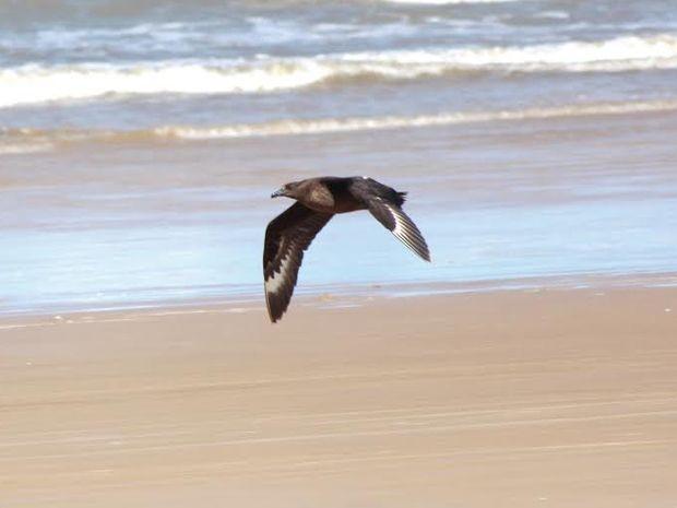 Ave encontrada em praia de Pirambu é reabilitada e devolvida à natureza (Foto: Bruno Almeida / FTP)