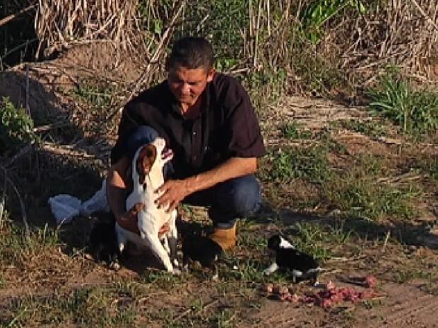 Cadela Menina, com o comerciante João e os filhotes (Foto: Reprodução / TV Tem)