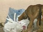 Bauru confirma mais um caso de leishmaniose