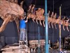 Esqueleto de dinossauro de cem milhões de anos é exposto em NY