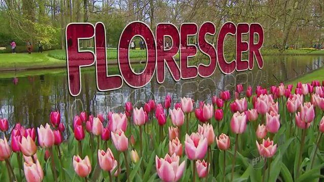 Promoção 'Florescer' vai premiar telespectadores com jardim (Foto: Reprodução EPTV)