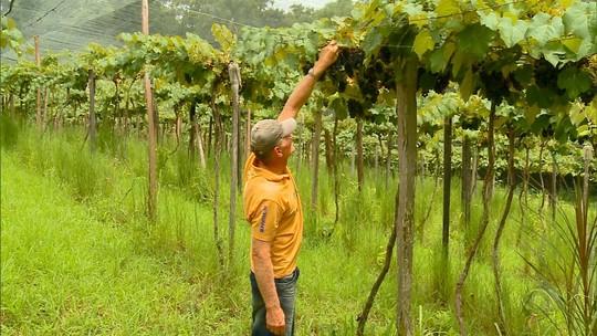 Família de agricultores de Horizontina aposta na produção do próprio alimento