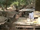 Homem é multado por manter 121 galos usados em rinhas, diz polícia