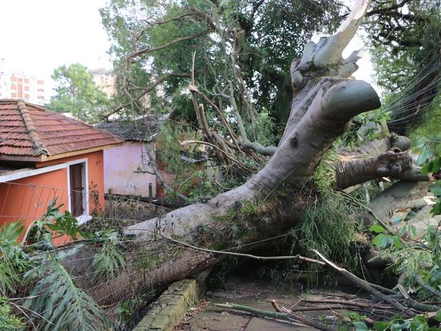 Tronco de árvore bloqueia calçada na rua Silveiro em Porto Alegre (Foto: Joyce Heurich/G1 RS)