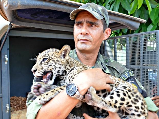 Filhote foi entregue ao Ibama na manha desta sexta-feira (19) e deve ser encaminhado para zoológico no Espirito Santo (Foto: Aluizio Oliveira/Arquivo Pessoal)