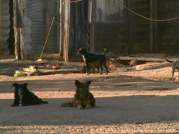 Associação abriga 95 cachorros e neste ano sete morreram (Foto: Eder Ribeiro/ EPTV)