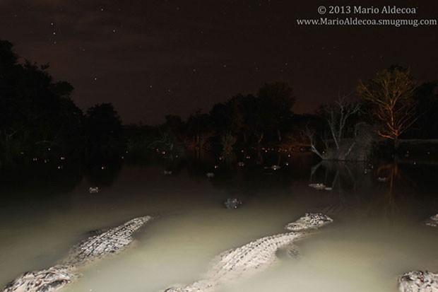 Fotógrafo teve câmera arrastada para dentro d'água enquanto ele fotografava os répteis em uma fazenda de aligátores em Everglades (Foto: Mario Aldecoa/Divulgação)