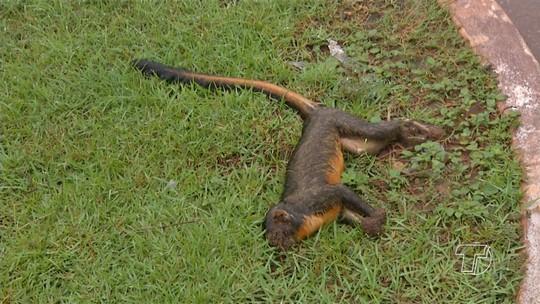 Sespa aguarda resultado de amostras de 9 macacos mortos na região