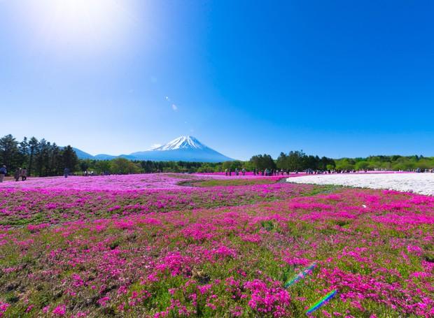 4-lugares-coloridos-shibazakura-hill-japão (Foto: Thinkstock)
