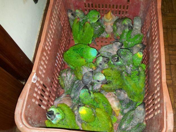 Aves estavam em fundo falso de carro (Foto: Reprodução / TV TEM)