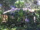Fotos mostram escola encoberta por mato na Ilha de Santana, no Amapá