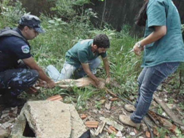 Fêmea de veado catingueiro invadiu escola e deu trabalho para ser resgatada  (Foto: reprodução/TV Tem)