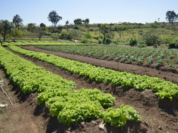 Verduras e legumes fresquinhos vêm da horta da Unidam (Foto: Fotógrafos PMJ)