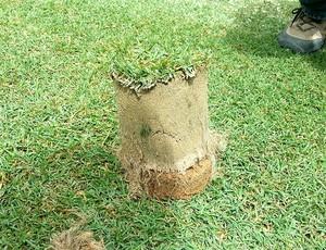 gramado do Mineirão (Foto: Divulgação)