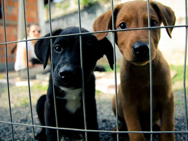 Filhotes, adultos e cães idosos podem ser adotados (Foto: Cão Terapia/Divulgação)
