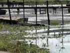 Plantas aquáticas causam problemas para pescadores em Buritama
