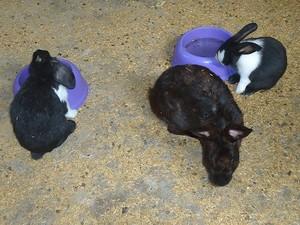 A venda de coelhos na páscoa aumenta cerca de 50% em Uberlândia (Foto: Vanessa Duarte)