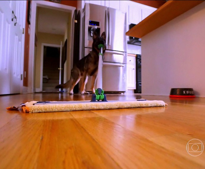 Esse cachorro ajuda nas tarefas de casa (Foto: TV Globo)