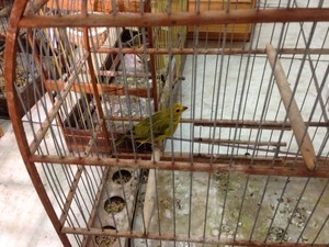 Pássaros serão encaminhados ao zoológico de Sapucaia do Sul (Foto: Dayanne Rodrigues/RBS TV)