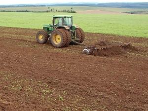 Produção com sementes transgênicas aumenta vertiginosamente, dizem especialistas (Foto: Cocamar/Divulgação)