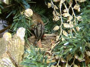 Nascimento na árvore de natal (Foto: Reginaldo dos Santos/EPTV)