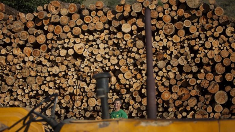 celulose_papel_producao_floresta (Foto: Marcelo Min/Ed. Globo)
