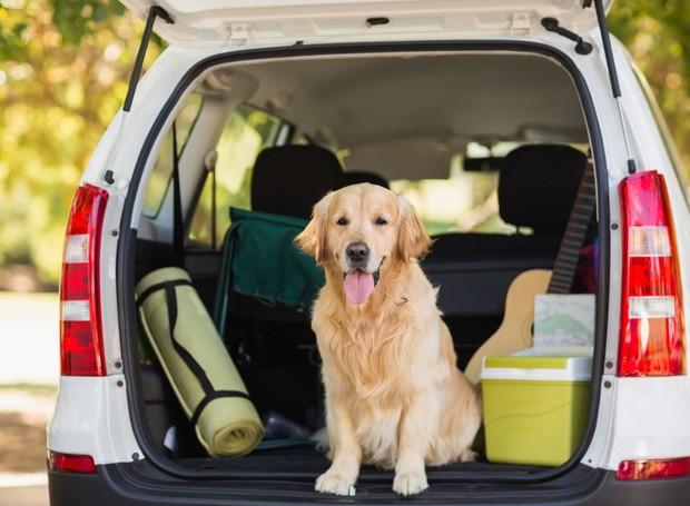 cachorro-viagem-carro (Foto: Thinkstock)