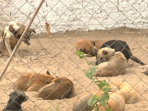 Semana de proteção dos animais tem programação em Campina Grande (Foto: Reprodução / TV Paraíba)
