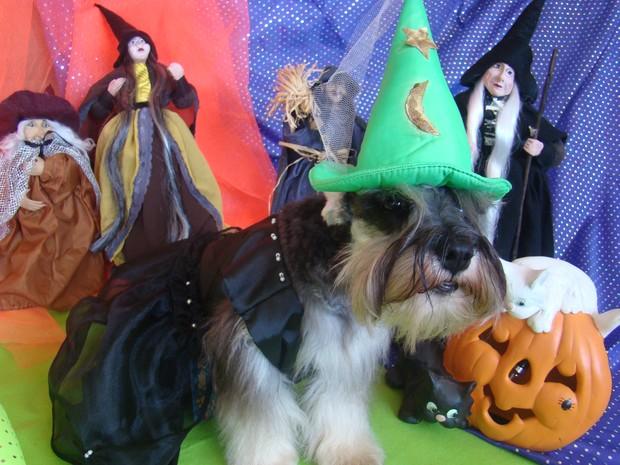 Halloween dos cachorros em Fortaleza (Foto: Narriman Borges/Arquivo pessoal)
