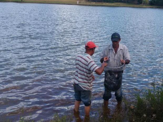 Prefeitura jogou 4 mil peixes tilápia e pacu em lago (Foto: Divulgação/ Prefeitura Sarutaiá)