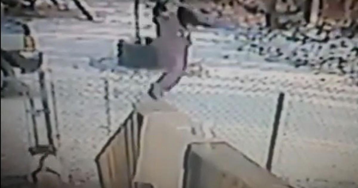 Câmera flagra americana sofrendo ataque feroz de gato nos EUA