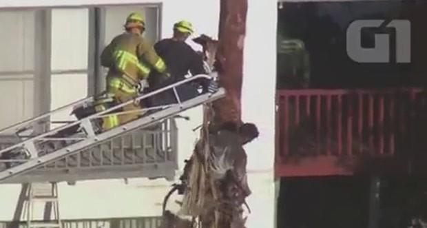 Homem foi resgatado após ficar pendurado em árvore nos EUA (Foto: Reuters)