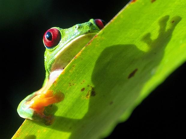 Biodiversidade (Foto: Christian Ziegler/ZieglerPhotos.com/Nature)