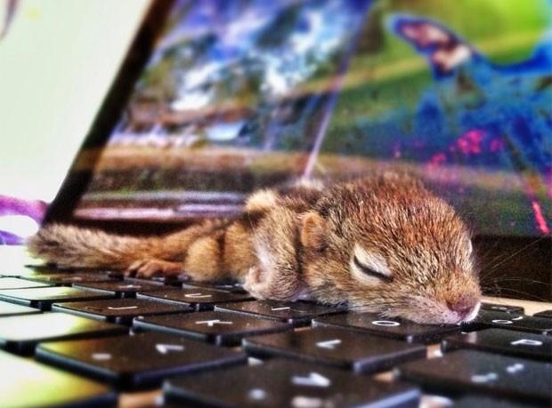O bichinho não se importa muito com o lugar onde vai dormir (Foto: Reprodução/Facebook/Ironammonite)